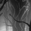 Into The Woods – Steve Firchow Thumbnail